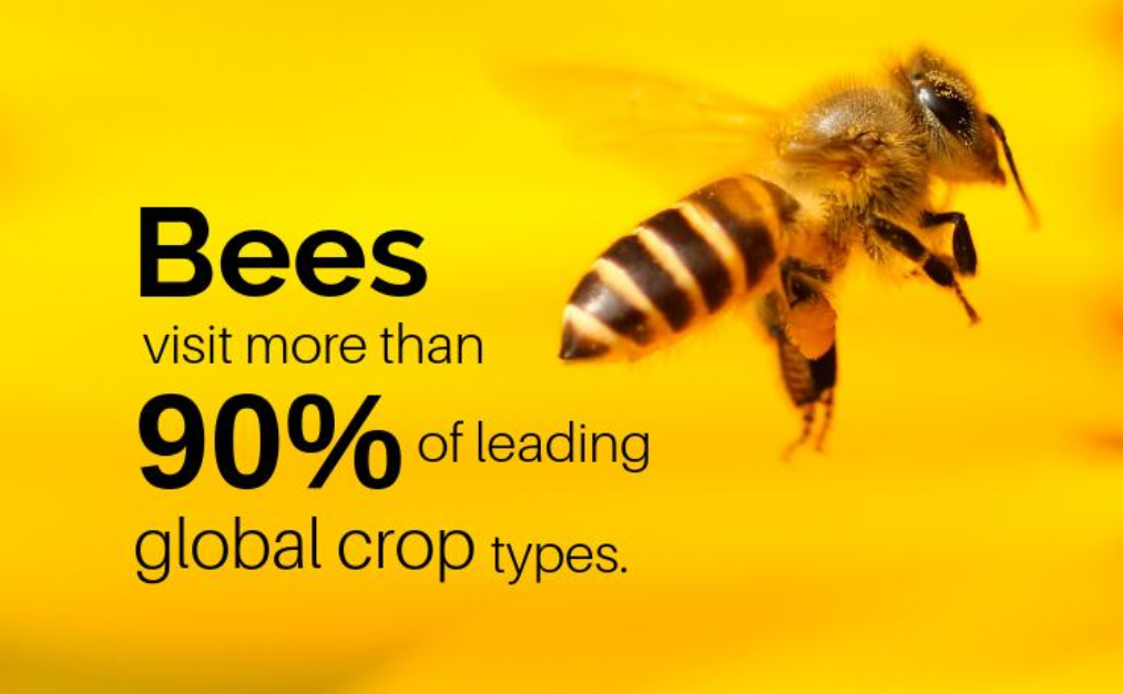 World Bee Day Credit IPBES